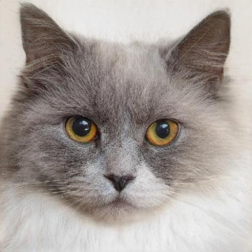 Photo taken by Brant Crockett. Cat